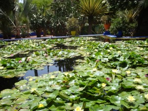 Jardin Majorelle, by Safaa 2009